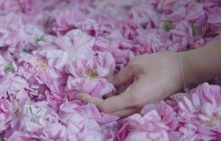 L'important c'est la rose, produit par Ladybirds Films